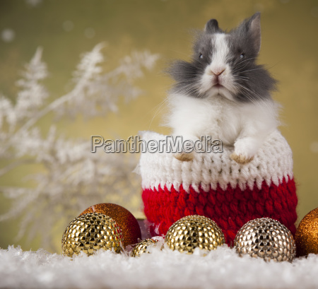 holiday, christmas, bunny, in, santa, hat - 25313398