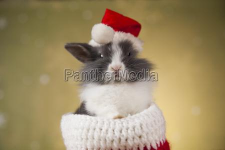 holiday, christmas, bunny, in, santa, hat - 25313592