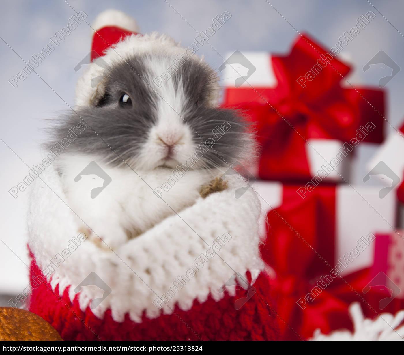 holiday, christmas, bunny, in, santa, hat - 25313824