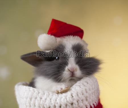 holiday, christmas, bunny, in, santa, hat - 25313832