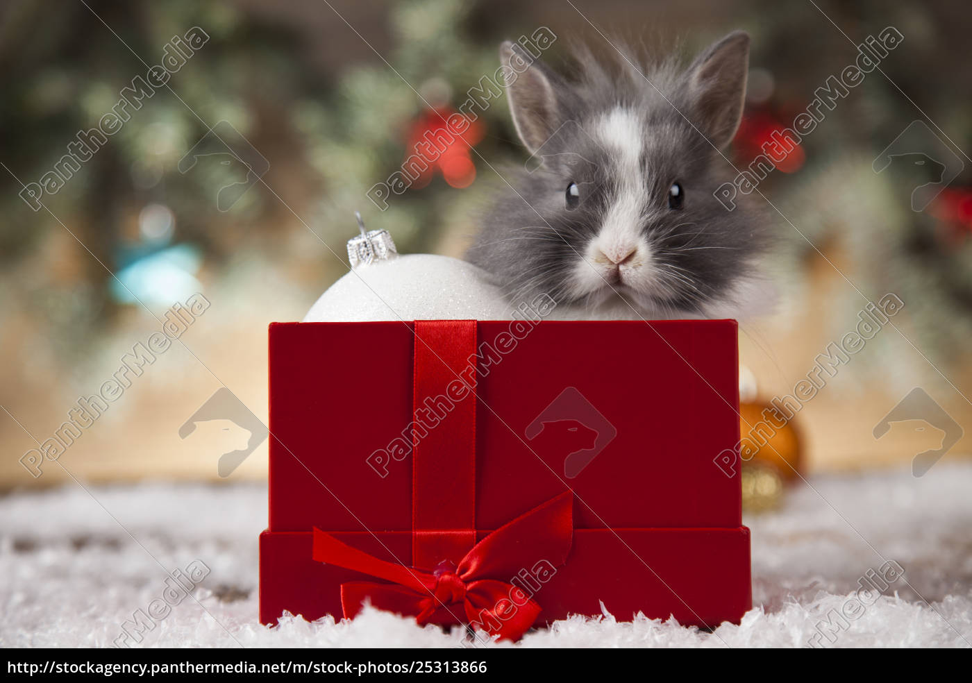 holiday, christmas, bunny, in, santa, hat - 25313866