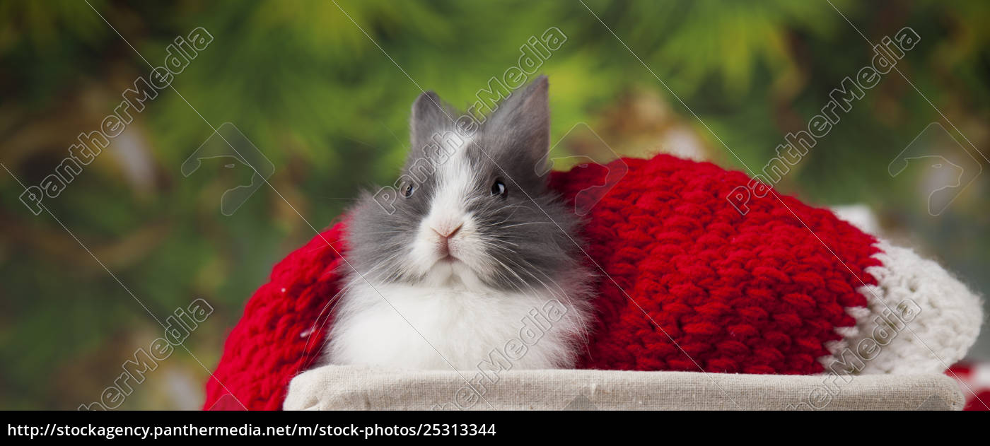 little, bunny, funny, rabbit, on, christmas, background - 25313344