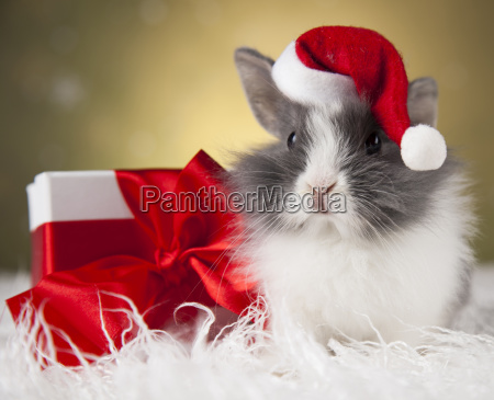 little, bunny, funny, rabbit, on, christmas, background - 25313530