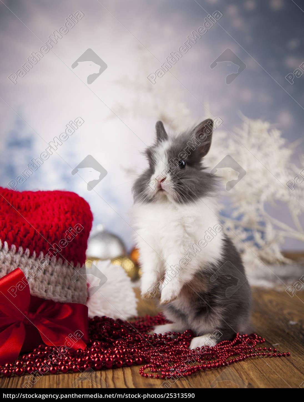 little, bunny, funny, rabbit, on, christmas, background - 25313590