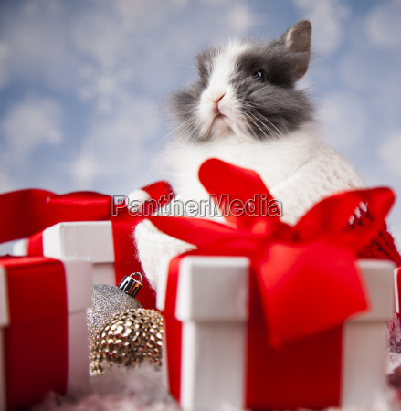 little, bunny, funny, rabbit, on, christmas, background - 25313608