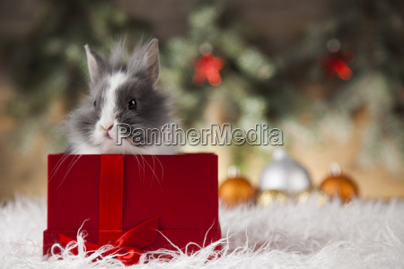 little, bunny, funny, rabbit, on, christmas, background - 25313688