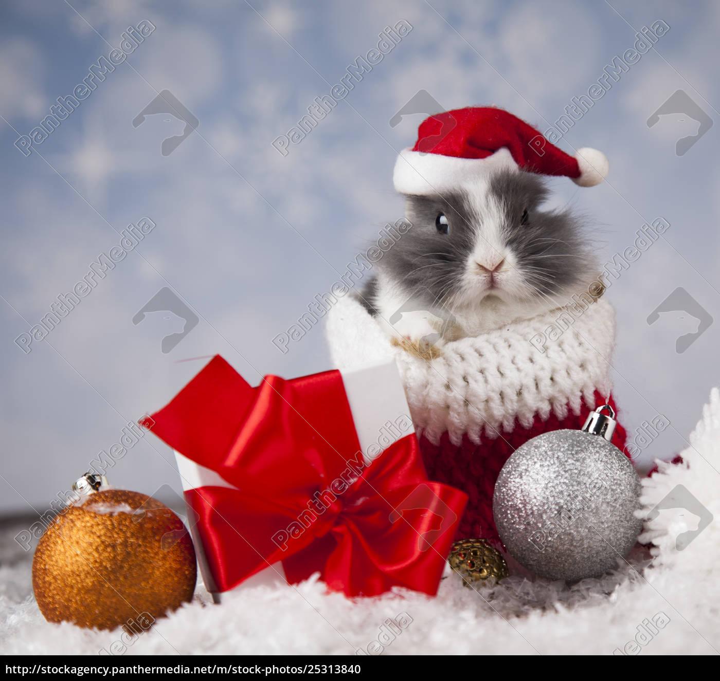 little, bunny, funny, rabbit, on, christmas, background - 25313840