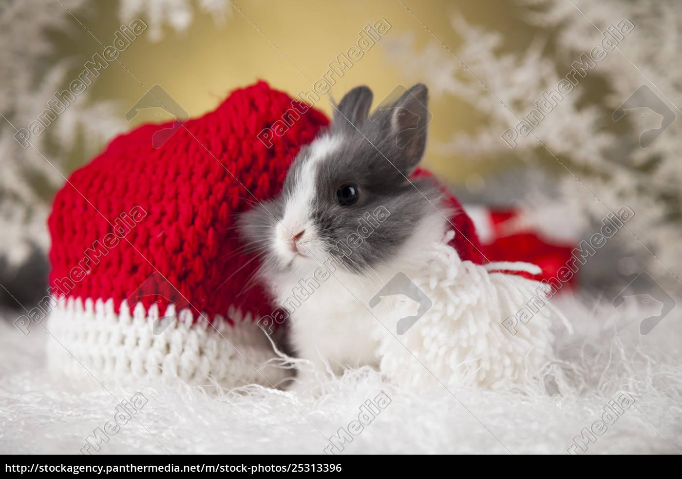 little, santa, bunny, on, christmas, background - 25313396