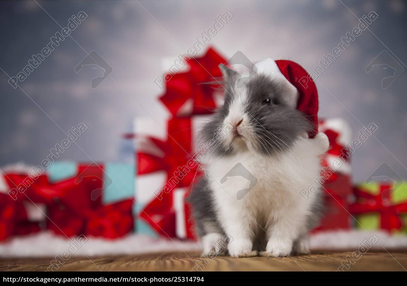 animal, , rabbit, , bunny, on, christmas, background - 25314794