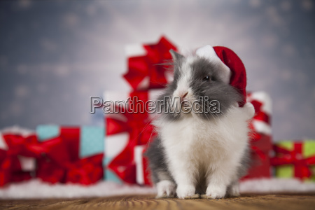 animal, , rabbit, , bunny, on, christmas, background - 25314794