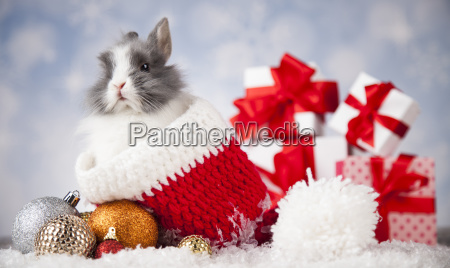 animal, , rabbit, , bunny, on, christmas, background - 25314976