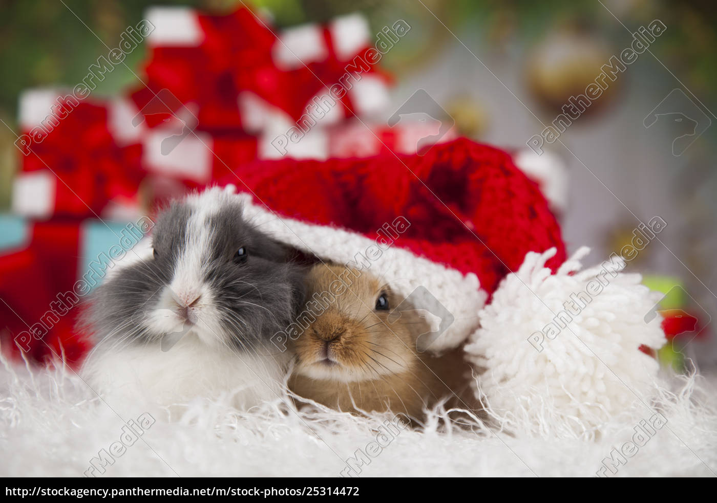 bunny, with, rabbit, , christmas, red, santa - 25314472