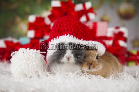 bunny, with, rabbit, , christmas, red, santa - 25314836