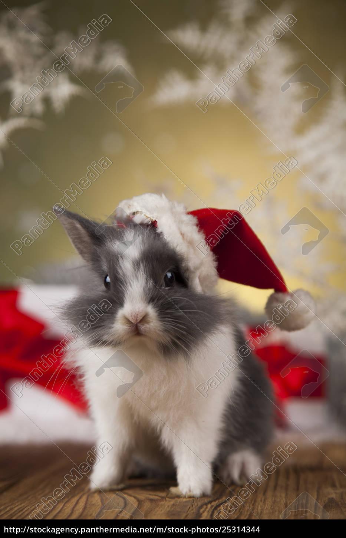 christmas, bunny, , santa, baby, red, hat - 25314344