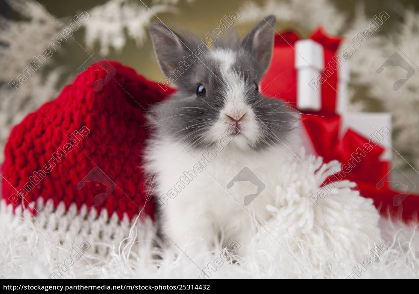 christmas, bunny, , santa, baby, red, hat - 25314432