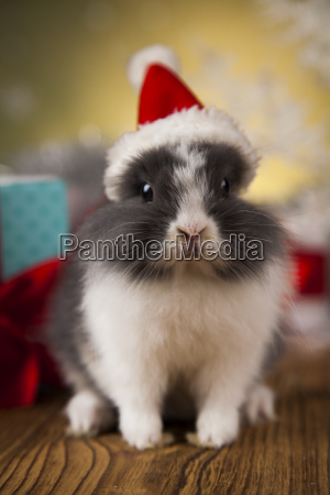 christmas, bunny, , santa, baby, red, hat - 25314522