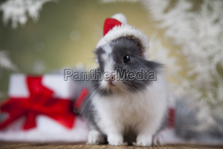 christmas, bunny, , santa, baby, red, hat - 25314526