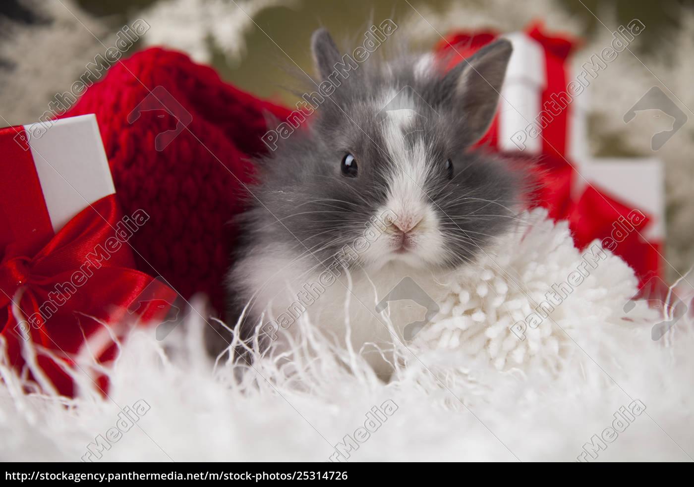 christmas, bunny, , santa, baby, red, hat - 25314726