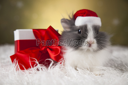 holiday, christmas, bunny, in, santa, hat - 25314824