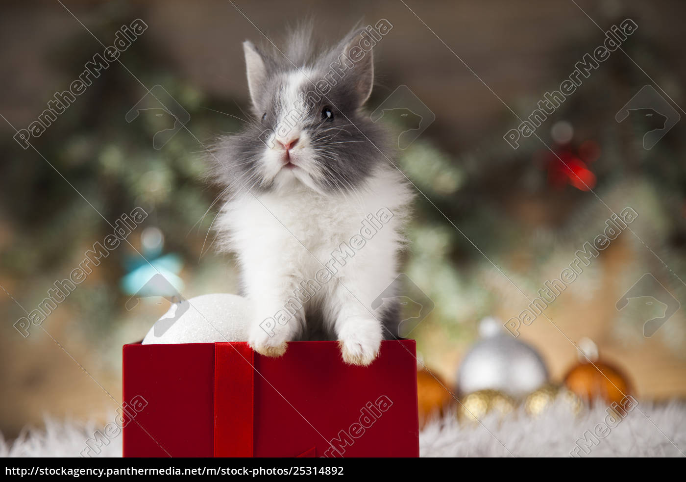 holiday, christmas, bunny, in, santa, hat - 25314892
