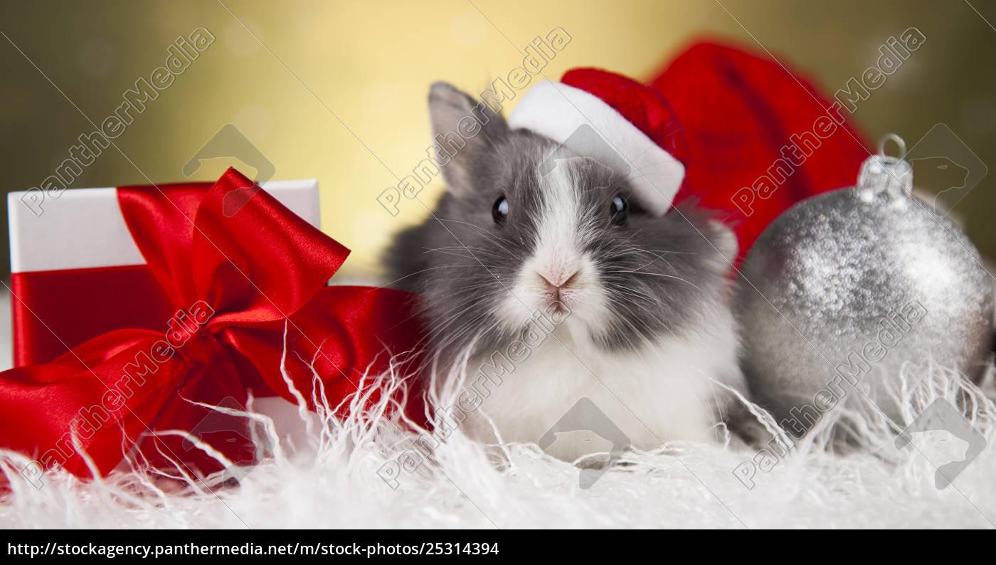 little, bunny, funny, rabbit, on, christmas, background - 25314394