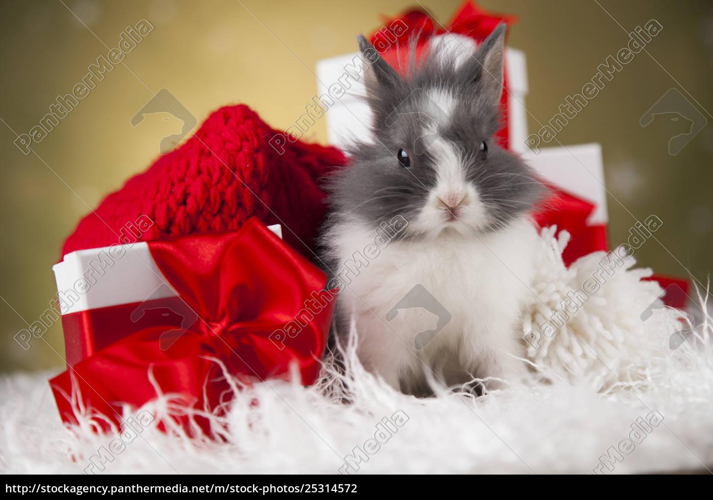 little, bunny, funny, rabbit, on, christmas, background - 25314572