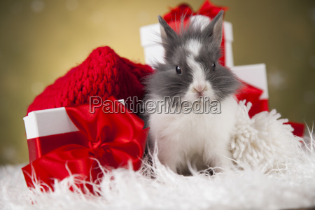 little, bunny, funny, rabbit, on, christmas, background - 25314572
