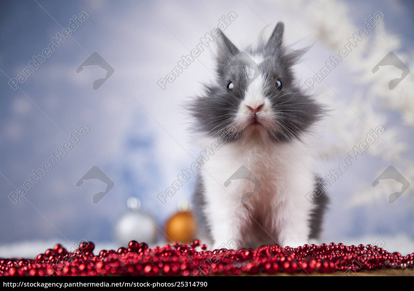 little, bunny, funny, rabbit, on, christmas, background - 25314790