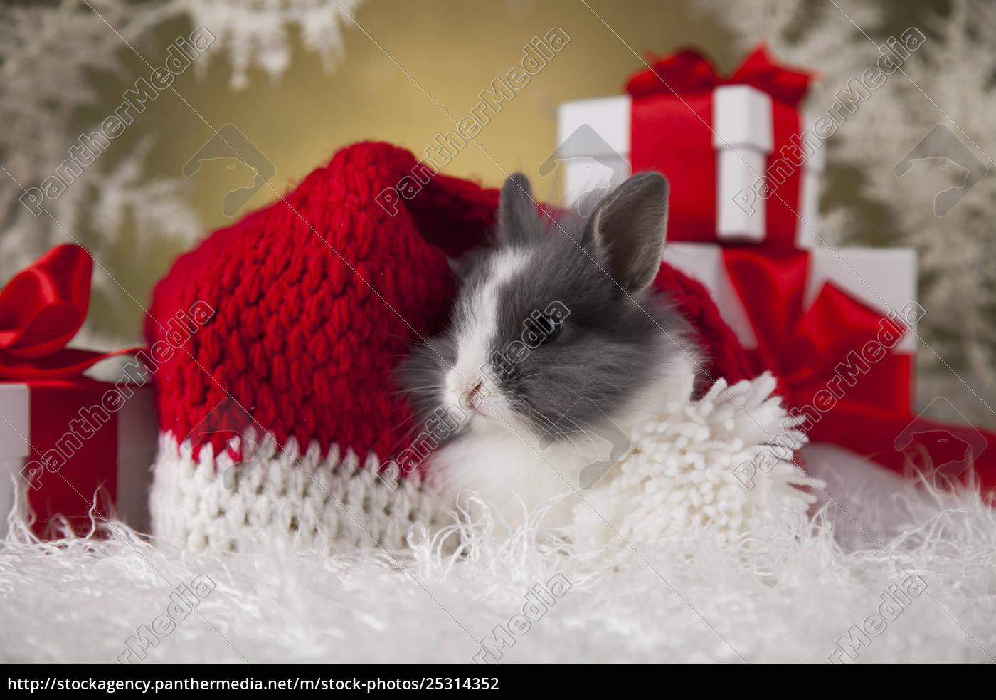 little, santa, bunny, on, christmas, background - 25314352