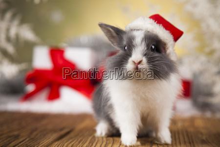 little, santa, bunny, on, christmas, background - 25314456