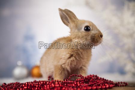 animal, , rabbit, , bunny, on, christmas, background - 25315286