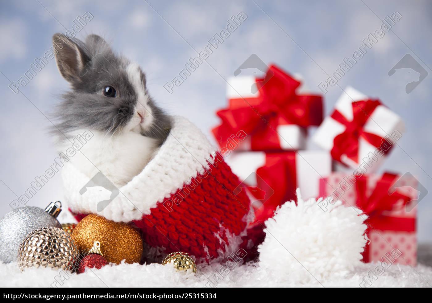 animal, , rabbit, , bunny, on, christmas, background - 25315334