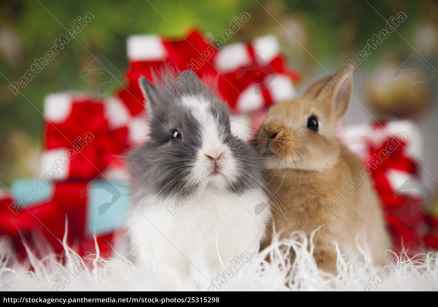 bunny, with, rabbit, , christmas, red, santa - 25315298