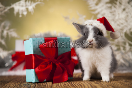 christmas, bunny, , santa, baby, red, hat - 25315092