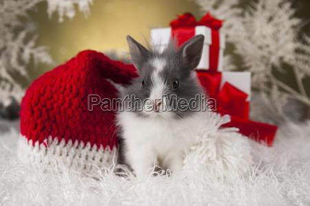 christmas, bunny, , santa, baby, red, hat - 25315122