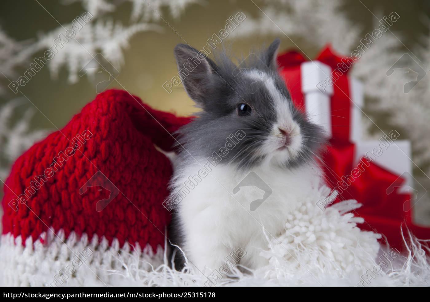 christmas, bunny, , santa, baby, red, hat - 25315178