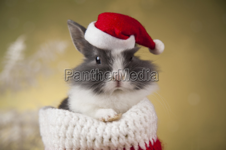 holiday, christmas, bunny, in, santa, hat - 25315182