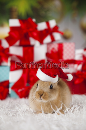 little, bunny, funny, rabbit, on, christmas, background - 25315008
