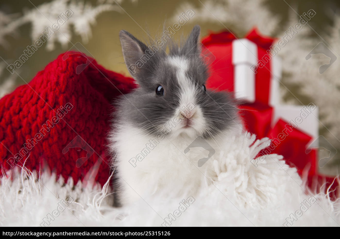 little, santa, bunny, on, christmas, background - 25315126
