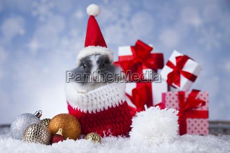 animal, , rabbit, , bunny, on, christmas, background - 25318568