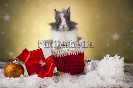 christmas bunny santa baby red hat
