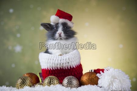 holiday christmas bunny in santa hat