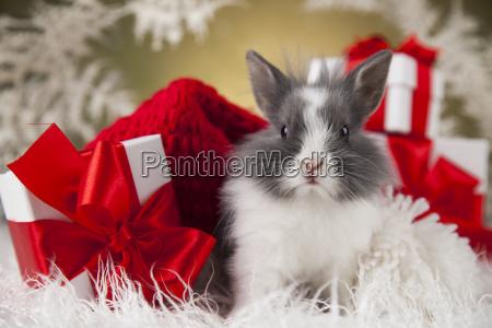 christmas, bunny, , santa, baby, red, hat - 25319072