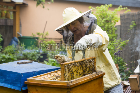 hobby beekeeper in the supply of