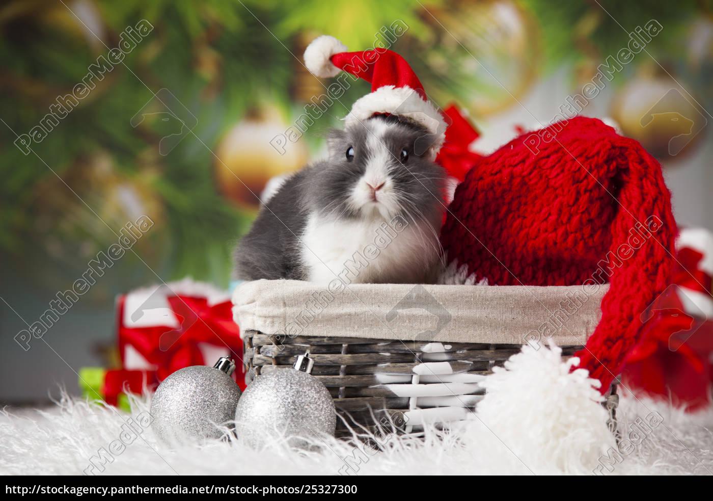 animal, , rabbit, , bunny, on, christmas, background - 25327300