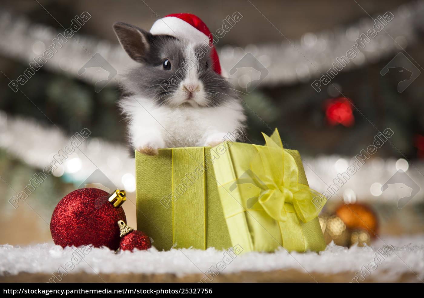 animal, , rabbit, , bunny, on, christmas, background - 25327756