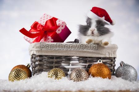 little, bunny, funny, rabbit, on, christmas, background - 25327714