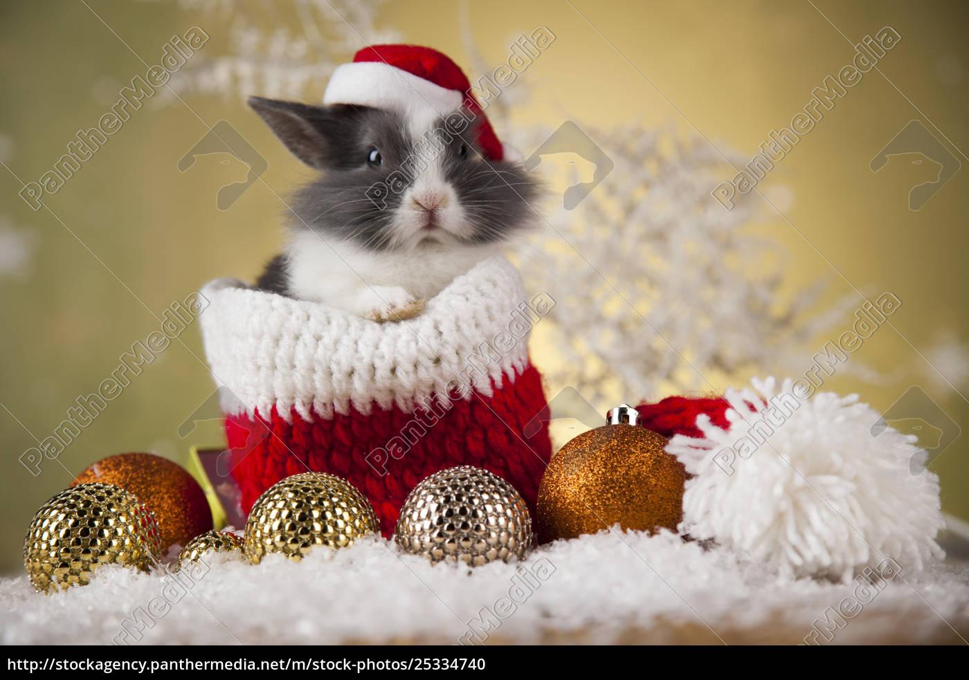 animal, , rabbit, , bunny, on, christmas, background - 25334740