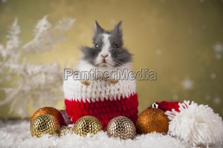 christmas, bunny, , santa, baby, red, hat - 25334580