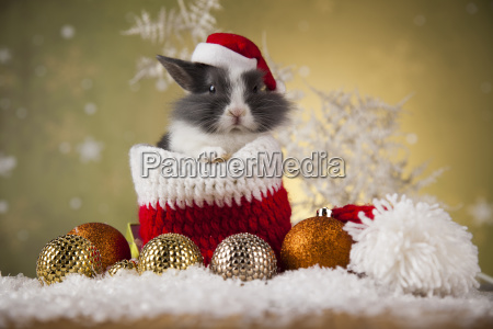 little, bunny, funny, rabbit, on, christmas, background - 25334730